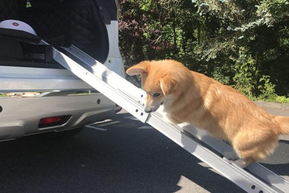Le Nissan X-Trail 4 dogs, votre toutou va adorer !