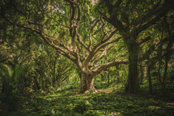 La vie secrète des arbres – Critique