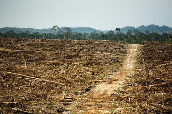 Le(s) problème(s) de l'huile de palme