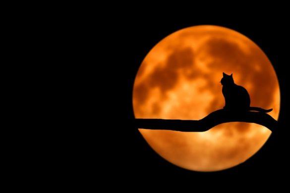 Menstrues et cycles de la lune — Les archétypes lunaires