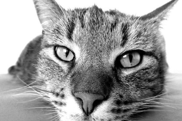 Adopter un chat en appartement, je suis pour !